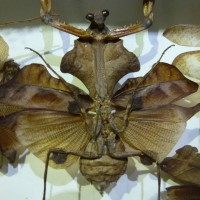 Insects_museum.JPG